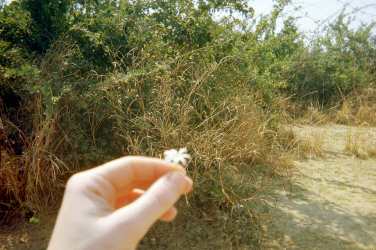 the author's hand holding a small jasmine flower on a walking safari in south luangwa national park in zambia