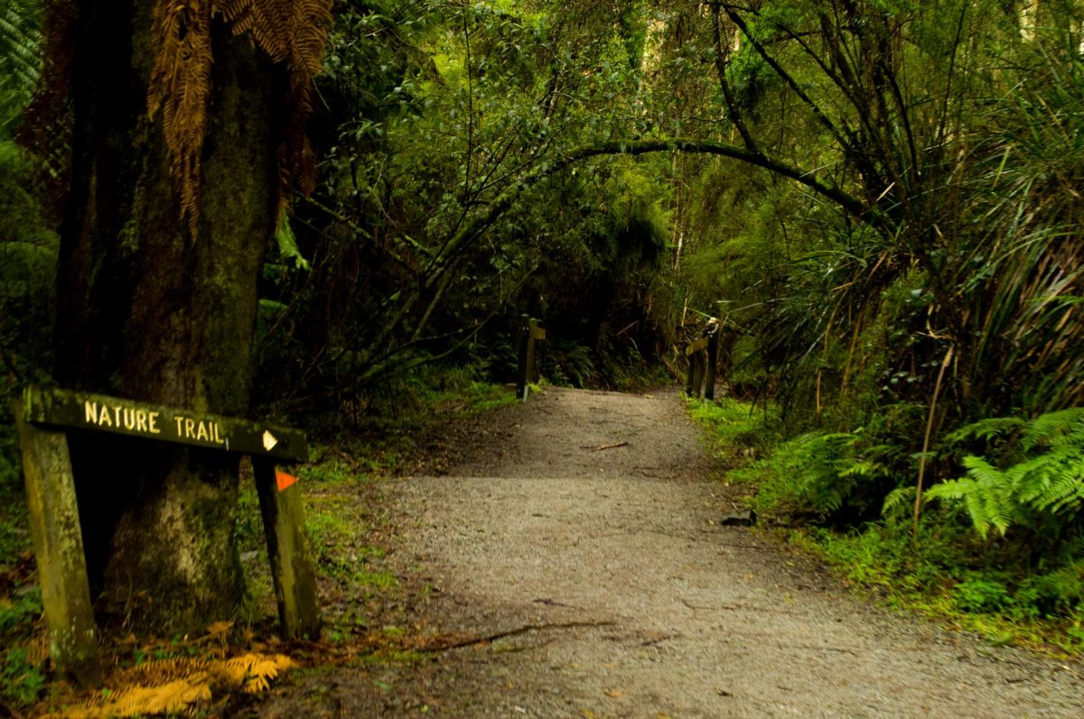 "A forest path and a sign reading ""nature trail."""
