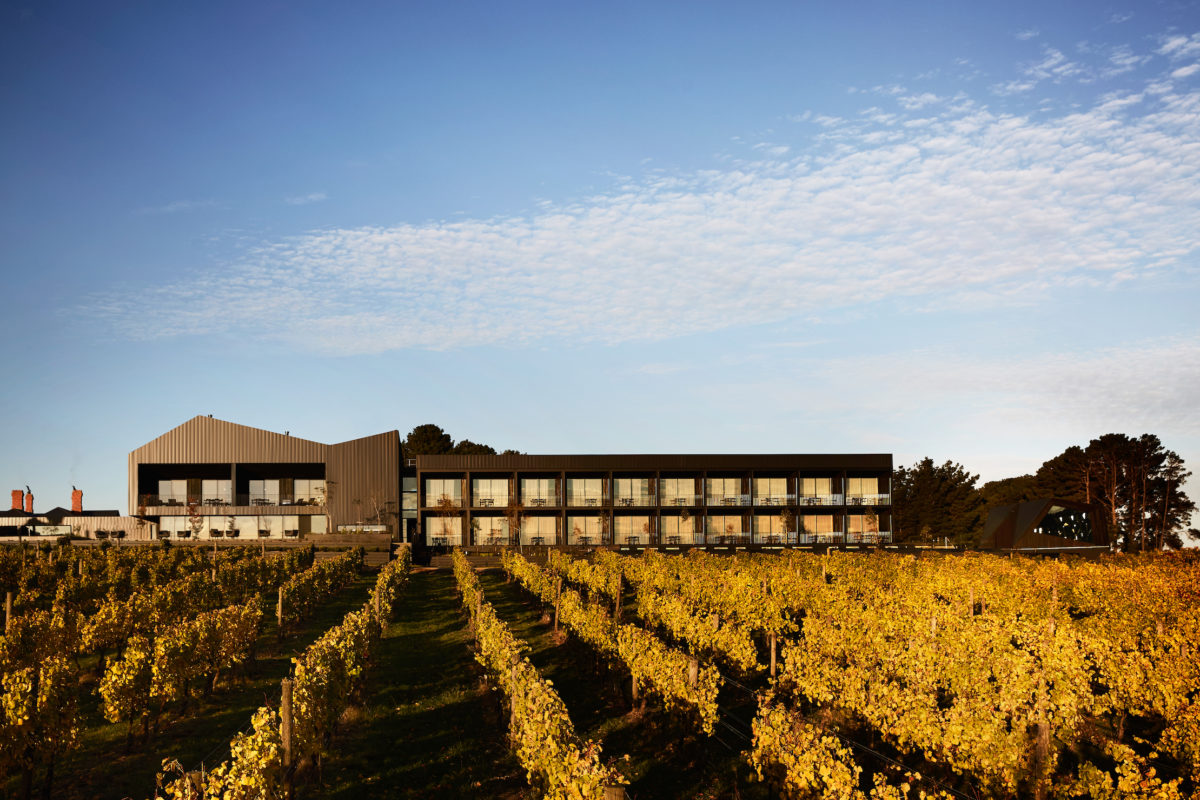 Rows of vines lit up by sunlight lead to a large hotel beneath a blue sky.