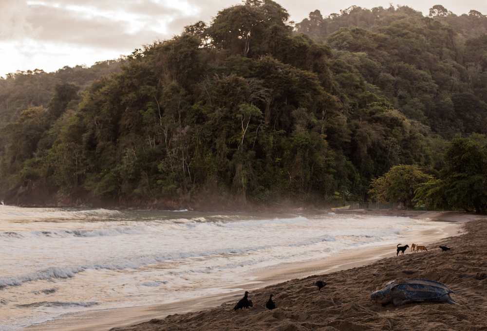 A foggy beach with a dense jungle in the background
