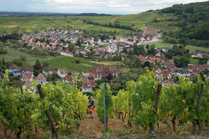 A vineyard overlooks a small French village in the middle of a green valley