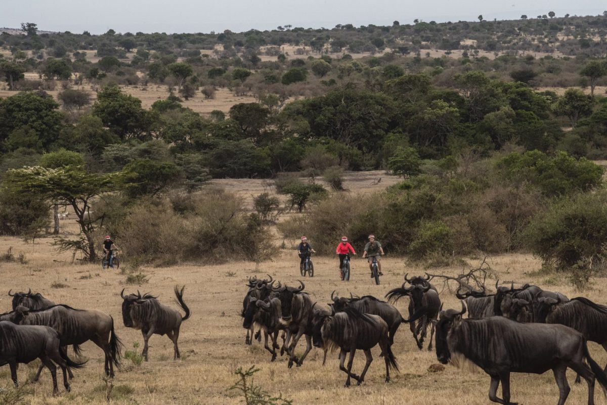people riding bikes toward wildebeests in a savanna