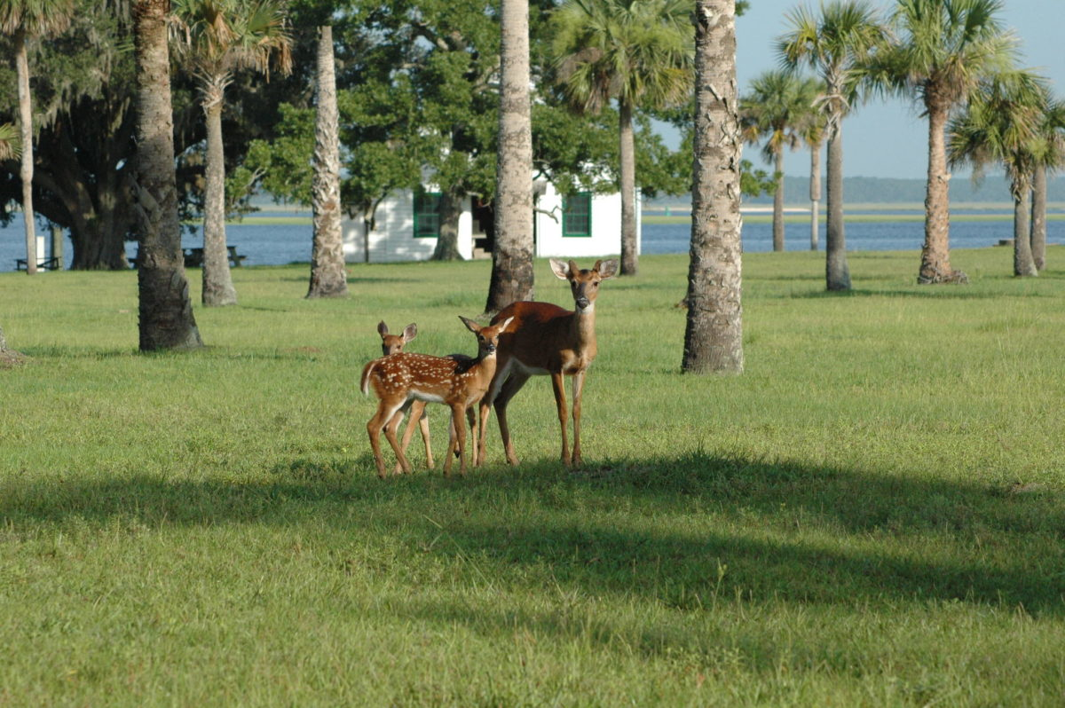 two deer on a meadow with palm trees