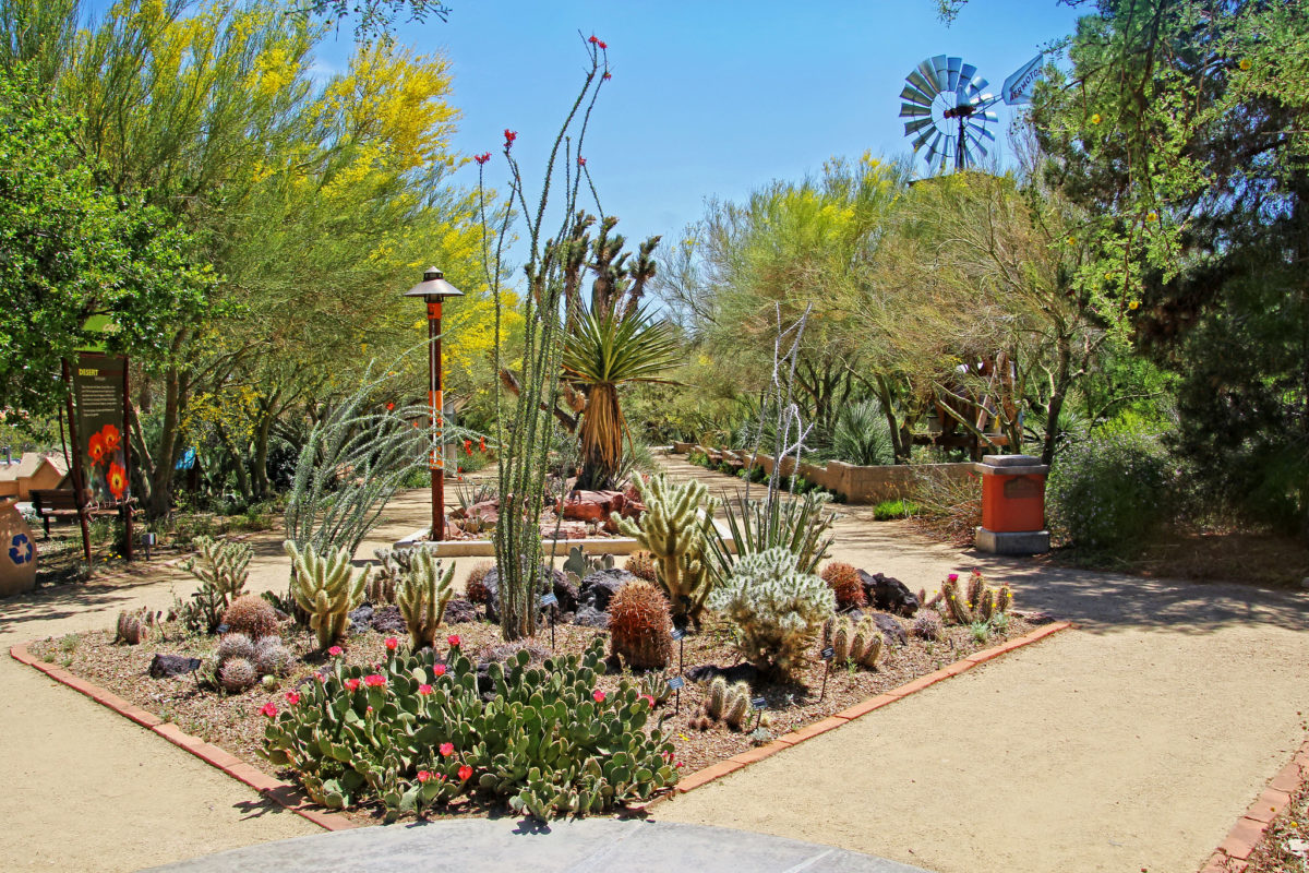 garden with trail and succulents