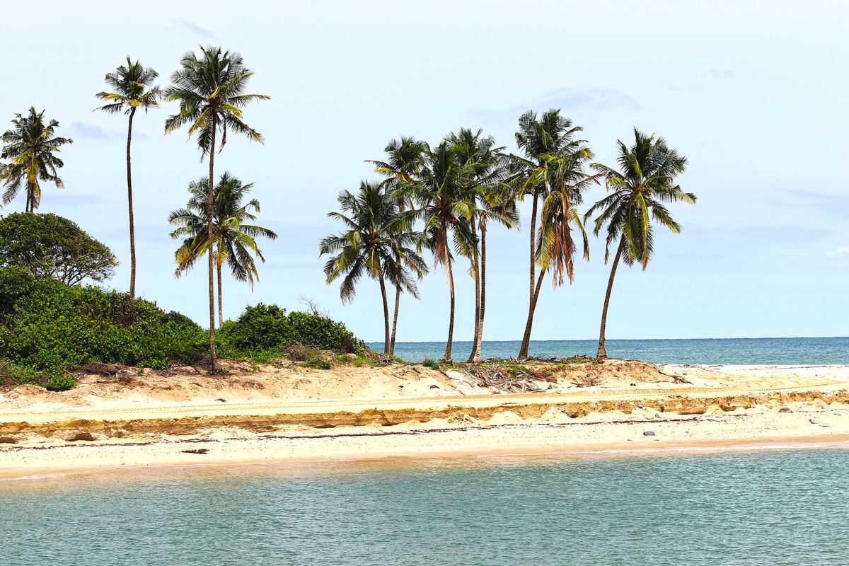 a group of palm trees on a sunny beach