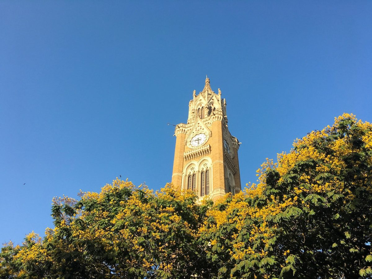 large clock tower above trees