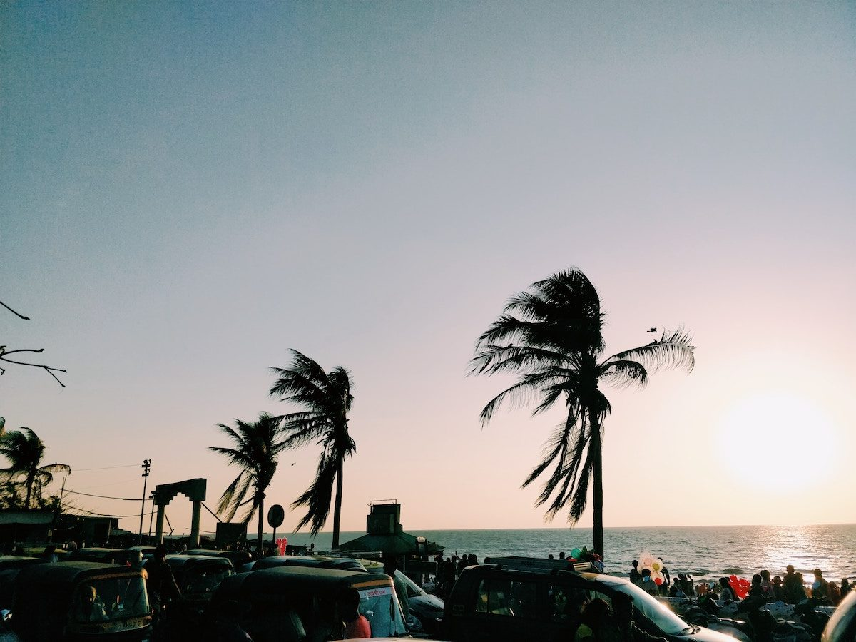 palm trees blowing in the wind near ocean, a large crowd, and cars