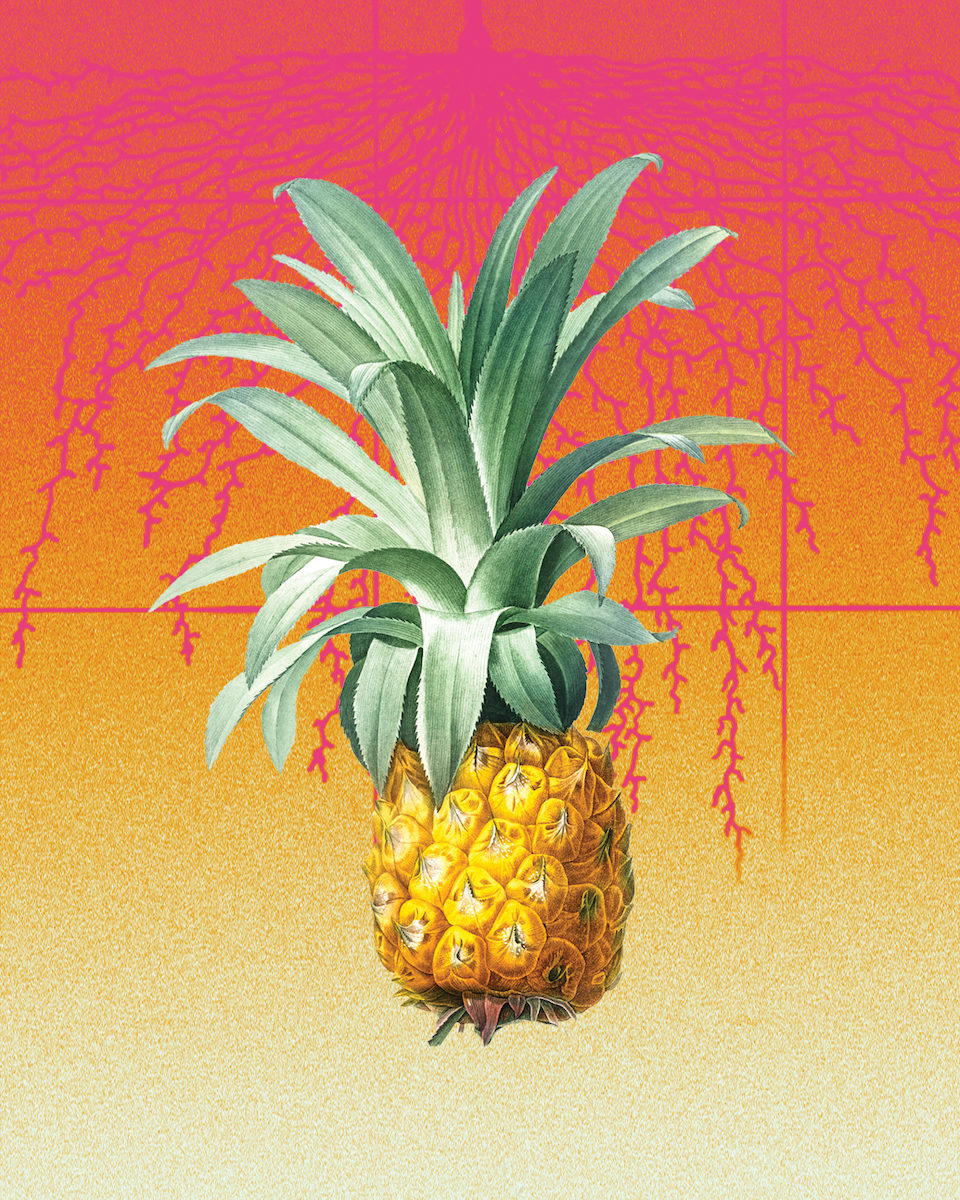 an illustration of a pineapple