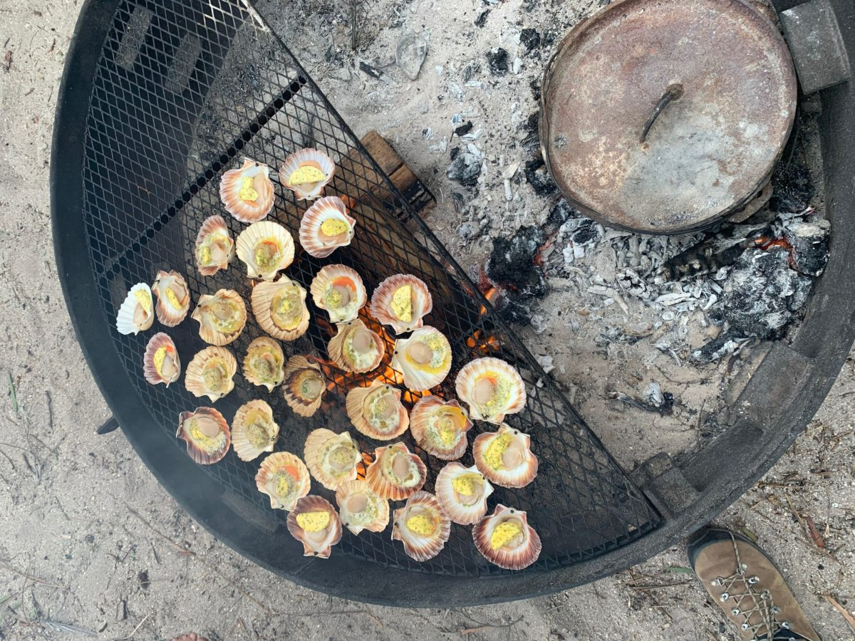scallops on the half shell on a coal-fired grill outdoors