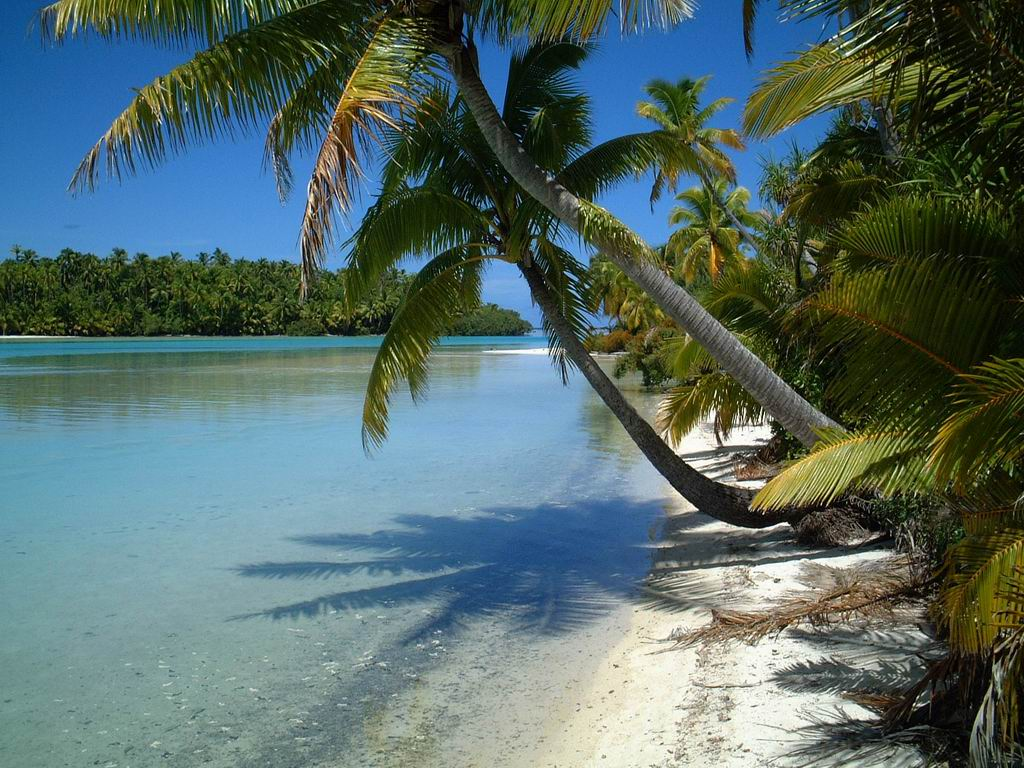 Pristine lagoon with palm trees