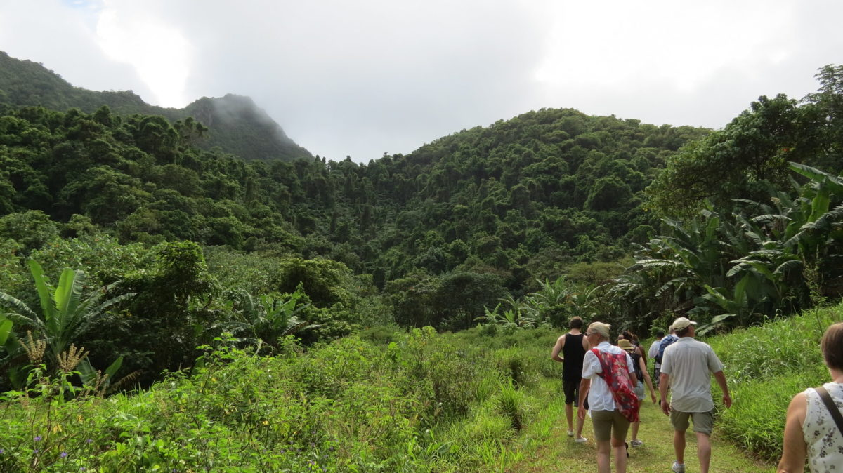 group of hikers ascending a lush green mountain