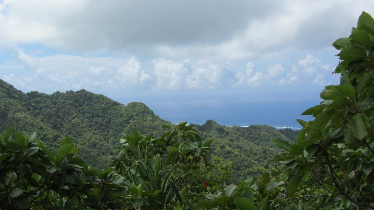 View of green Rarotonga Island from the top lookout point