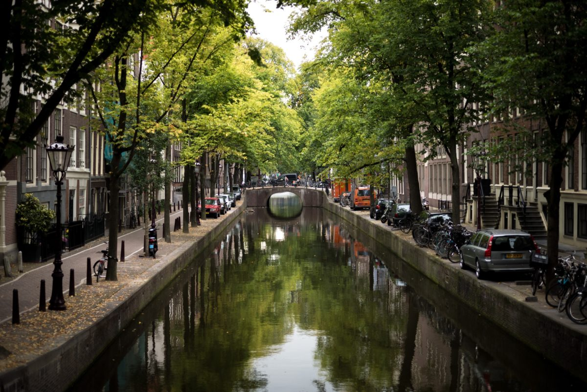 a tree-lined canal